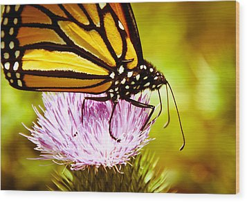 Busy Butterfly Wood Print by Cheryl Baxter