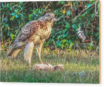 Wood Print featuring the photograph Buteo Jamaicensis by Rob Sellers
