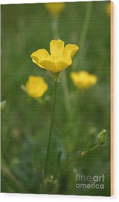 Buttercup Collection Photo 1 Wood Print