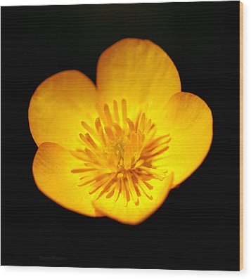 Buttercup Wood Print by Steven Poulton