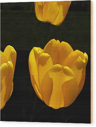 Buttercup Tulips Wood Print by Steven Milner