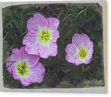 Buttercup Wildflowers - Pink Evening Primrose Wood Print
