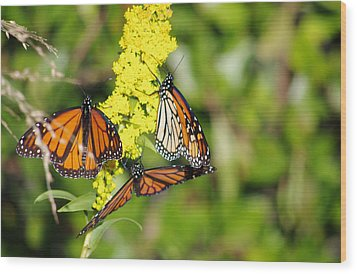 Wood Print featuring the photograph Butterflies Abound by Greg Graham