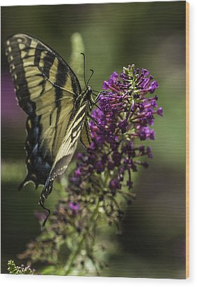 Butterflies Along The Blue Ridge Wood Print