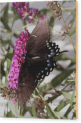 Wood Print featuring the photograph Butterflies Are Free by James C Thomas