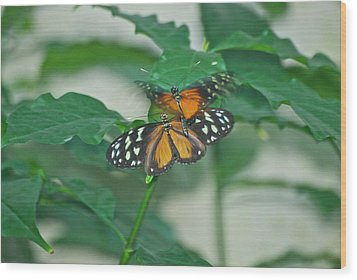 Wood Print featuring the photograph Butterflies Gentle Touch by Thomas Woolworth