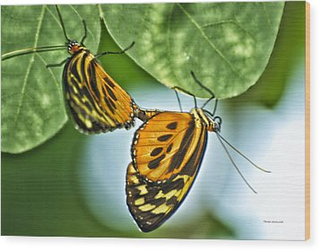 Wood Print featuring the photograph Butterflies Mating by Thomas Woolworth