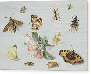 Butterflies Moths And Other Insects With A Sprig Of Apple Blossom Wood Print by Jan Van Kessel