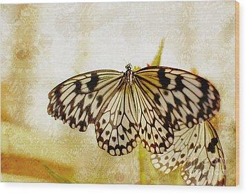 Butterflies On Lace Wood Print by Floyd Menezes