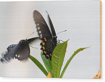 Wood Print featuring the photograph Butterflies Playing by Jay Nodianos
