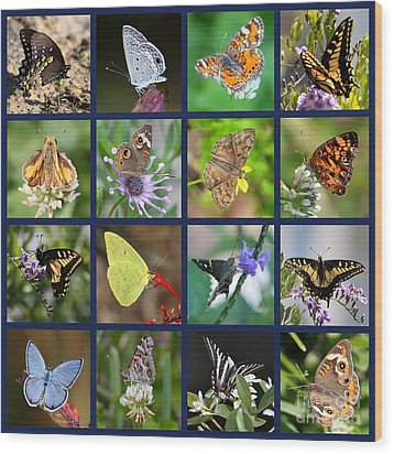 Butterflies Squares Collage Wood Print by Carol Groenen