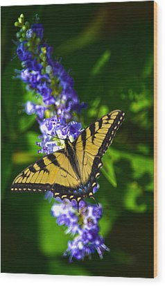 Butterflly Bush And The Swallowtail Wood Print by Sandi OReilly