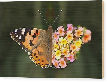 Butterflower Wood Print by Meir Ezrachi