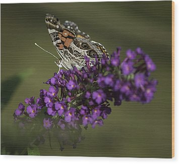 Butterfly 0001 Wood Print