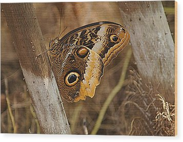 Butterfly 1 Wood Print by Kathy Churchman