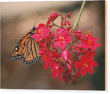 Wood Print featuring the photograph Butterfly 1 by Leticia Latocki