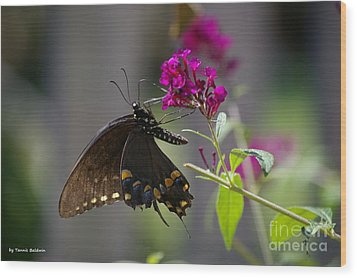 Wood Print featuring the photograph Butterfly 1 by Tannis  Baldwin