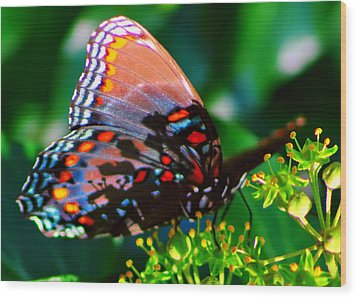 Butterfly 2 Wood Print by Kara  Stewart