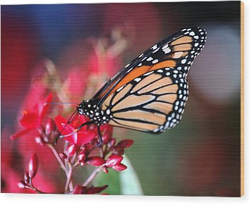 Wood Print featuring the photograph Butterfly 2 by Leticia Latocki