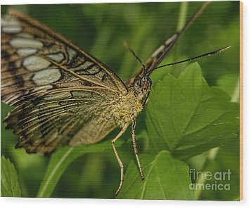 Wood Print featuring the photograph Butterfly 2 by Olga Hamilton