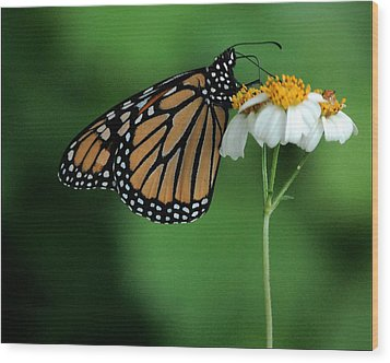 Wood Print featuring the photograph Butterfly 3 by Leticia Latocki