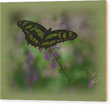 Wood Print featuring the photograph Butterfly 4 by Leticia Latocki