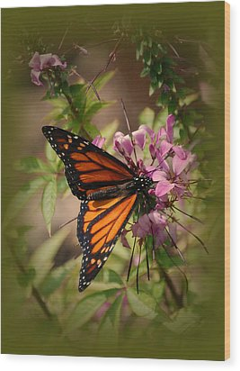 Wood Print featuring the photograph Butterfly 5 by Leticia Latocki