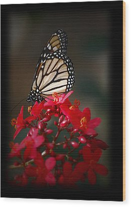 Wood Print featuring the photograph Butterfly 6 by Leticia Latocki