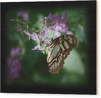 Wood Print featuring the photograph Butterfly 7 by Leticia Latocki