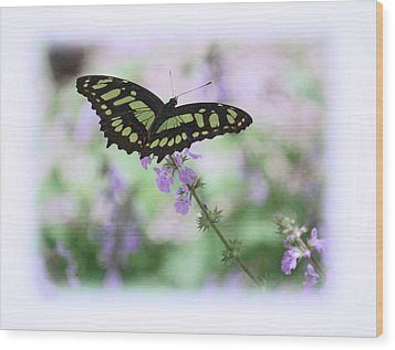 Wood Print featuring the photograph Butterfly 8 by Leticia Latocki