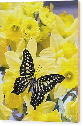 Butterfly Among The Daffodils Wood Print by Edward Fielding