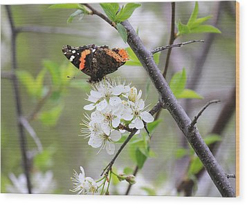 Wood Print featuring the photograph Butterfly And Apple Blossoms by Penny Meyers