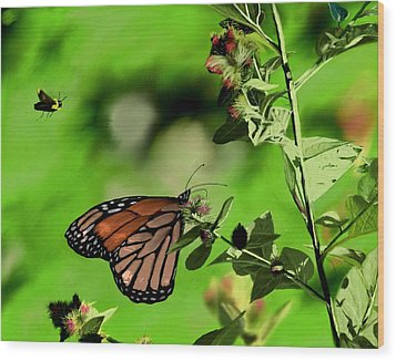 Butterfly And Bee Wood Print by Ron Grafe