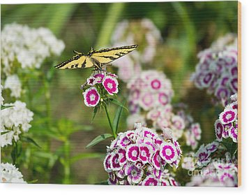 Butterfly And Bloom - Beautiful Spring Flowers And Tiger Swallowtail Butterfly. Wood Print by Jamie Pham
