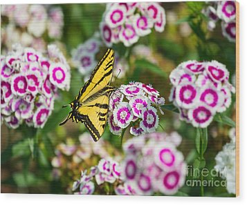 Butterfly And Blooms - Spring Flowers And Tiger Swallowtail Butterfly. Wood Print by Jamie Pham