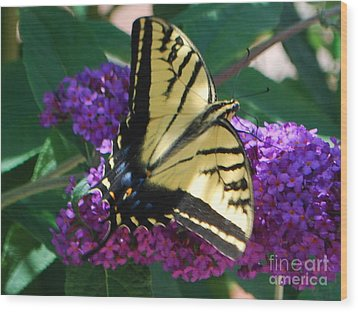 Wood Print featuring the photograph Butterfly And Bush by William Wyckoff