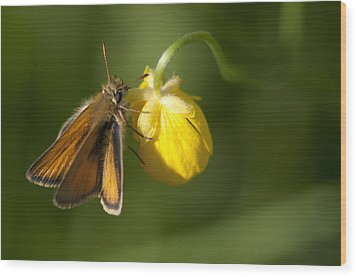 Butterfly And Buttercup  Wood Print