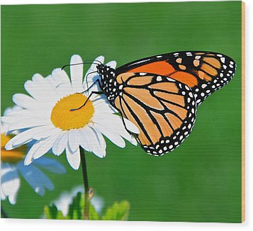 Butterfly And Daisey Wood Print