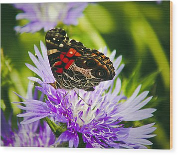 Butterfly And Flower Wood Print by Debra Crank