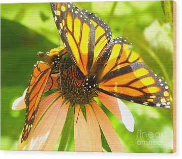 Butterfly And Friend Wood Print