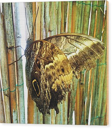 Butterfly And Light Wood Print by Beril Sirmacek