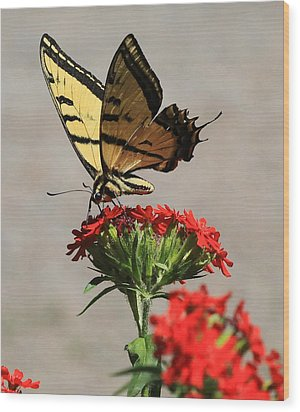 Wood Print featuring the photograph Butterfly And Maltese Cross 1 by Aaron Aldrich