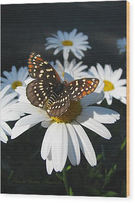 Butterfly And Shasta Daisy - My Spring Garden Wood Print