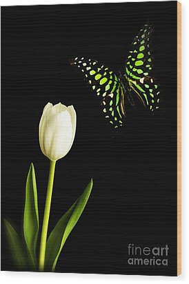 Butterfly And Tulip Wood Print by Edward Fielding