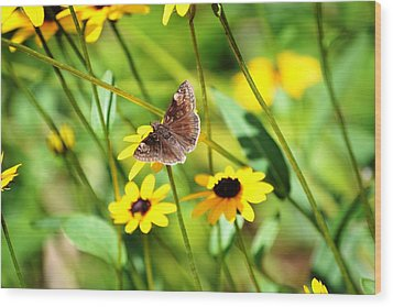 Butterfly And Yellow Flowers Wood Print by Carlee Ojeda