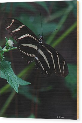 Butterfly Art 2 Wood Print by Greg Patzer