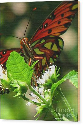 Butterfly Art Wood Print by Greg Patzer