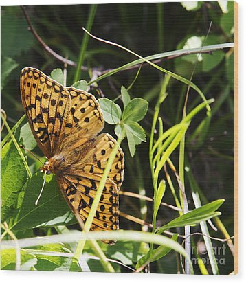 Butterfly At Signal Mountain Wood Print by Belinda Greb