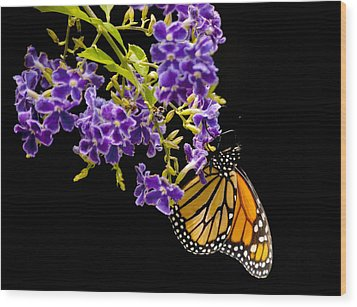 Wood Print featuring the photograph Butterfly Attraction by Phyllis Peterson