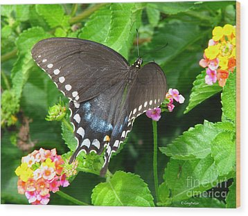 Butterfly Ballot Wood Print by Greg Patzer
